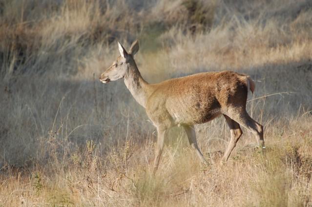 La Dirección General de Medio Natural y Biodiversidad organiza el taller sobre gestión de caza sostenible