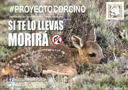'PROYECTO CORCINO': UNA LLAMADA A LA CONCIENCIACIÓN Y RESPETO DE LOS ANIMALES