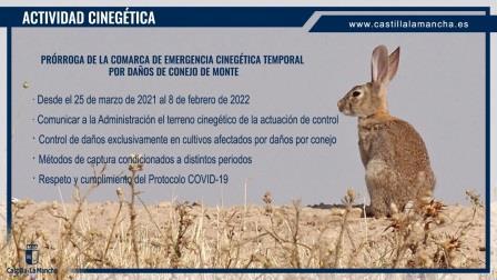 PRORROGADA HASTA FEBRERO DE 2022 LA COMARCA DE EMERGENCIA CINEGÉTICA POR DAÑOS DE CONEJO DE MONTE